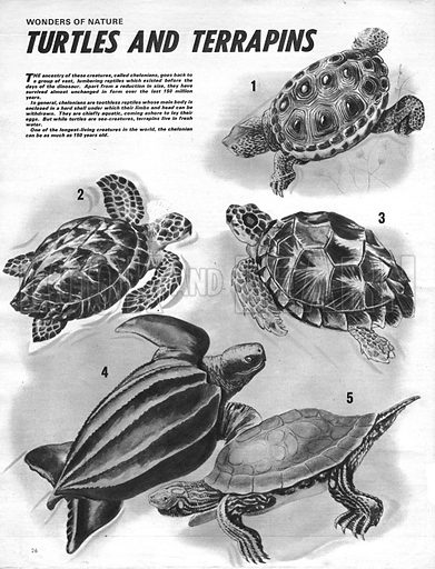 Wonders of Nature: Turtles and Terrapins.