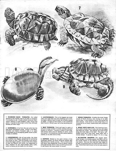 Wonders of Nature: Turtles and Terrapins.