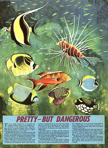 Wonders of Nature: Pretty -- But Dangerous. Tropical fish can be deadly as well as beautiful.