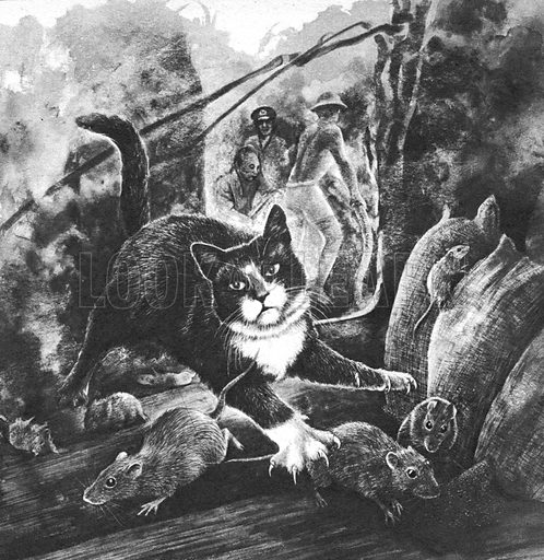 Unusual Animal Stories: One Cat Against a Thousand Rats.