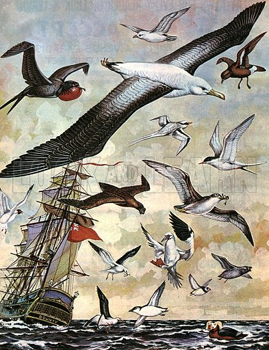 Seabirds of the World.