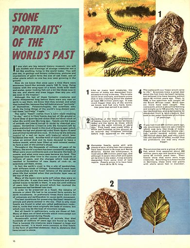 Stone 'Portraits; of the World's Past -- fossils.