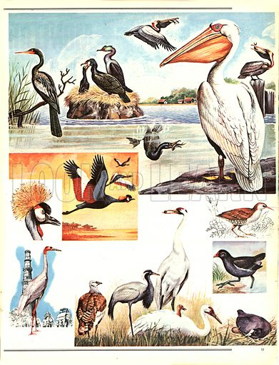 At Home on Land -- and Water. Birds went fishing long before man captured the harvest of the sea.