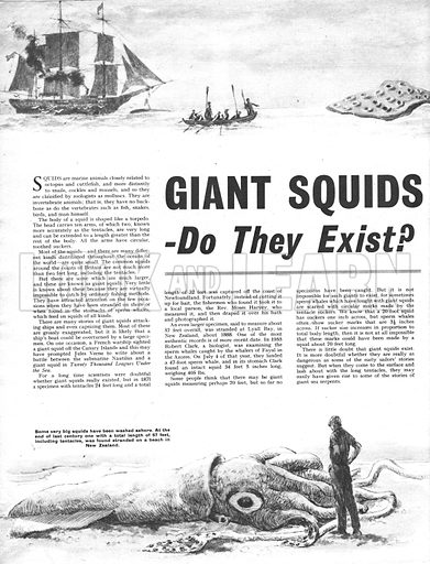 Giant Squids -- Do They Exist?.
