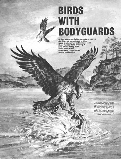 Birds With Bodyguards. Three birds who were in danger of extinction who are now under man's protection.