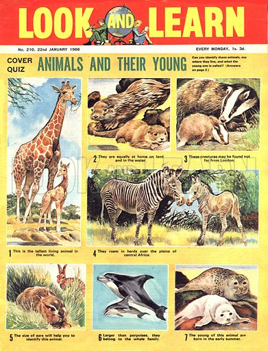 Picture Quiz -- Animals and Their Young.