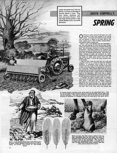 Judith Campbell's Country Notebook: March -- Spring Days, Sowing Days.