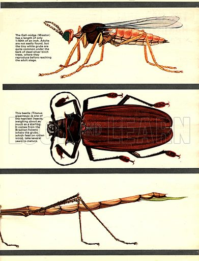 The Wonderful World of Insects.