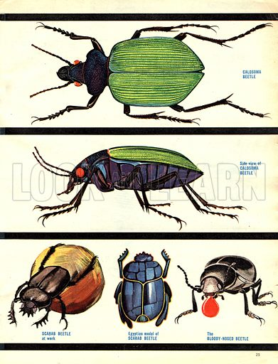 The Wonderful World of Insects: Design for Survival.