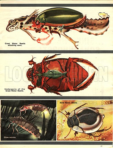 The Wonderful World of Insects: Fierce Flesh-Eaters.