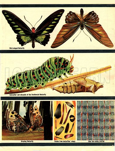 The Wonderful World of Insects: Beautiful Butterflies.