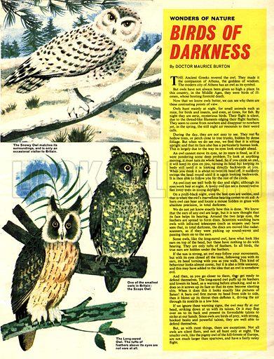 Wonders of Nature: Birds of Darkness.