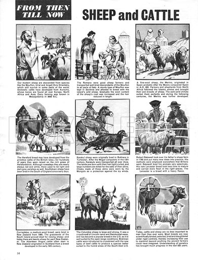 From Then Till Now: Sheep and Cattle.