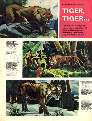 Wonders of Nature: Tiger, Tiger….