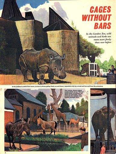 Cages Without Bars. In London Zoo, wild animals and birds can roam more freely than ever before.