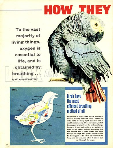 How They Breathe. To the vast majority of living things, oxygen is essential to life, and is obtained by breathing...