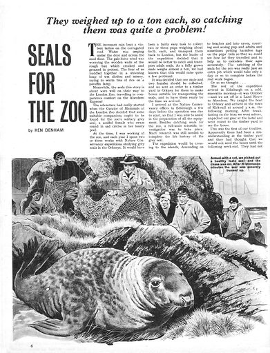Seals for the Zoo. Ken Denham is sent to the Orkneys to capture a companion for the London Zoo. Seals weigh up a ton each... so catching them is quite a problem.