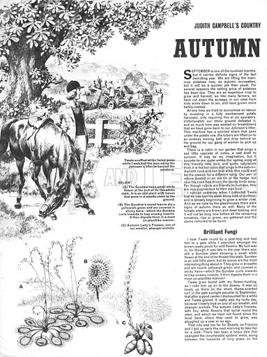 Judith Campbell's Country Notebook: September -- Autumn Days.