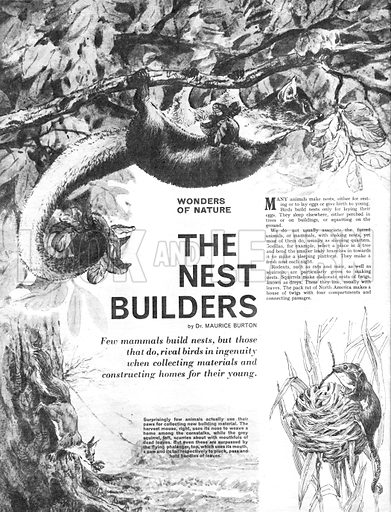 Wonders of Nature: The Nest Builders.