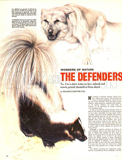 Wonders of Nature: The Defenders. How animals and insects protect themselves from attack.