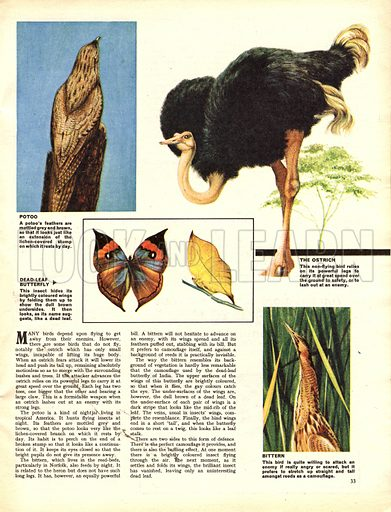 Wonders of Nature: When Danger Threatens. How animals and insects protect themselves from attack.