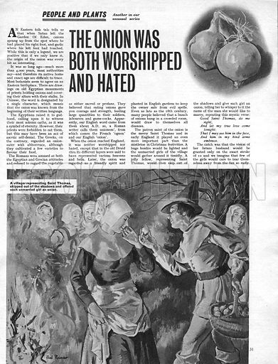 """People and Plants: The Onion was Both Worshipped and Hated. """"A villager representing Saint Thomas skipped out of the shadows and offered each unmarried girl an onion."""" An old tradition in England was to gather unmarried girls together at Christmas and have them whisper the name of the man she would like to marry."""