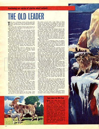 The Old Leader. A story of wild goats.