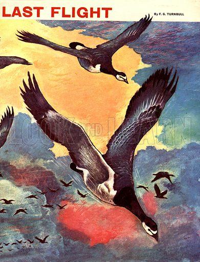 Kalann's Last Flight. A story by F. G. Turnbull.