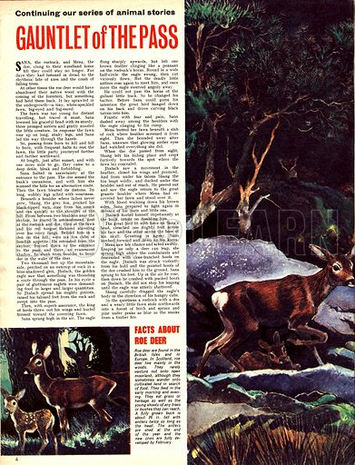 Gauntlet of the Pass. A story of roe deer.