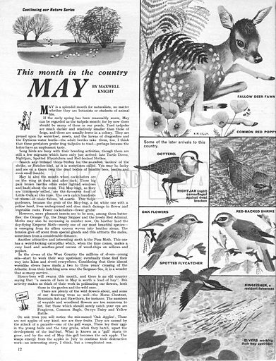 This Month in the Country: May.