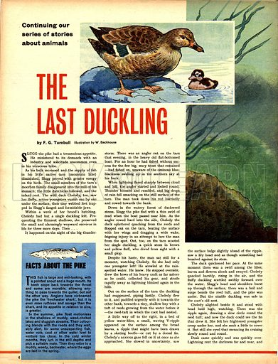 The Last Duckling. A story by F. G. Turnbull.