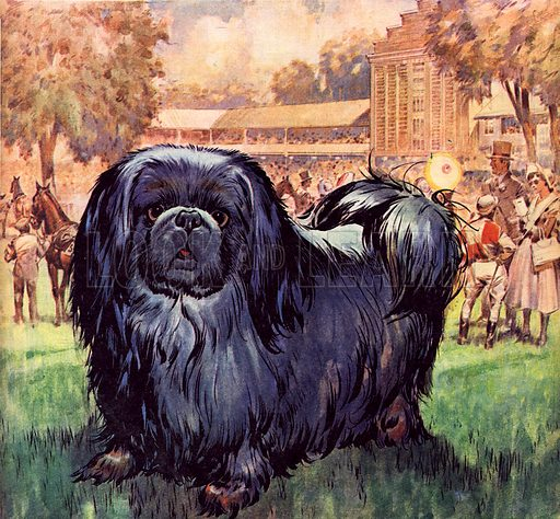 Famous Dogs: Black Knight. The Pekinese dog owned by artist Sir Alfred Munnings.