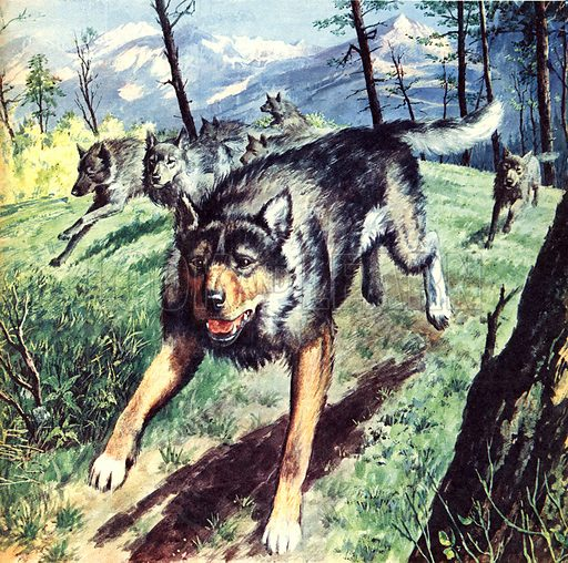 Famous Dogs: The Call of the Wild, based on the novel by Jack London.
