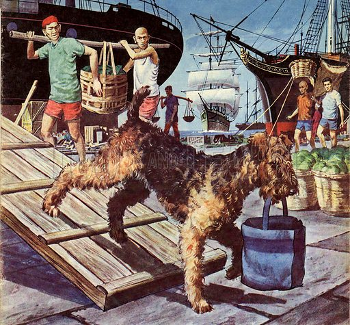 Around-the-world dog Owney (illustration, picture, art: Barrie Linklater)