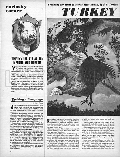 Turkey Trouble! A story by F. G. Turnbull. Plus Curiosity Corner: 'Tirpitz', the pig at the Imperial War Museum.
