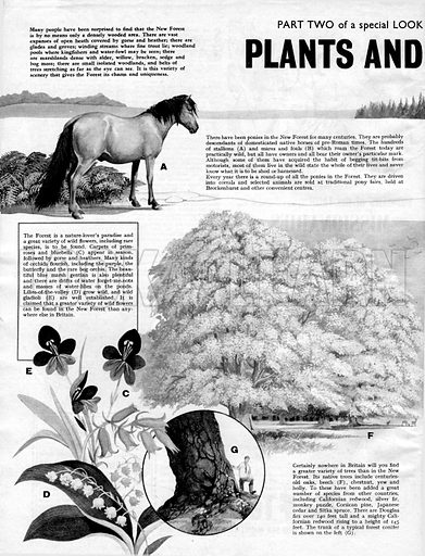 Plants and Animals of the New Forest.