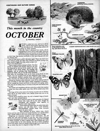 This Month in the Country: October.