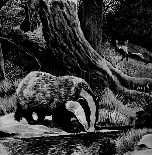 The Badgers of Brockley Wood. A story by Norah Burke.