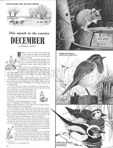 This Month in the Country: December.