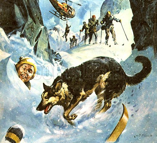Animal Heroes: Rescue in the Snow. Lupo, the Alsation -- a member of the Austrian Mountain Rescue team.