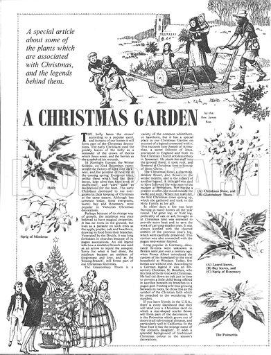A Christmas Garden.