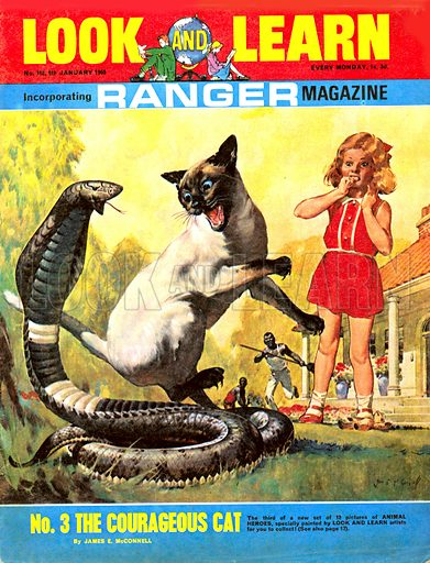 Animal Heroes: The Courageous Cat. Wanda Viviers was playing happily on the lawn at her home in Johannesburg when a Ringhalls snake came slithering towards her. Wanda's pet siamese cat, Wong, hurled itself at the snake and killed it.