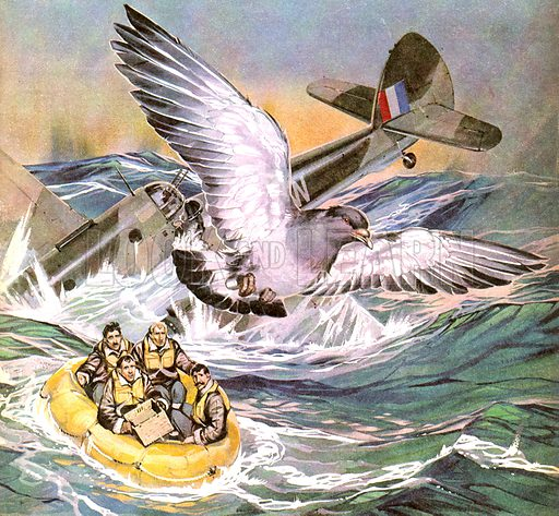 Animal Heroes: Winkie, the Winged Messenger. In 1942, a Beaufort Bomber crash landed in the North Sea with little hope of being found ... except for Winkie, a messenger pigeon.