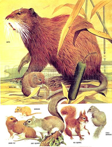 Animal Families: Rodents in Great Britain.