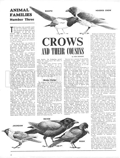 Animal Families: Crows and Their Cousins.
