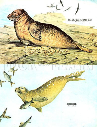 Animal Families: The Seals of Great Britain.