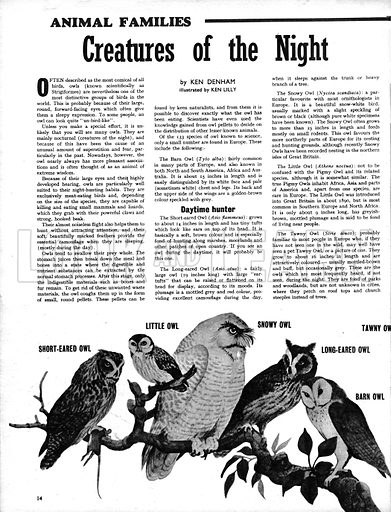 Animal Families: Creatures of the Night -- Owls.