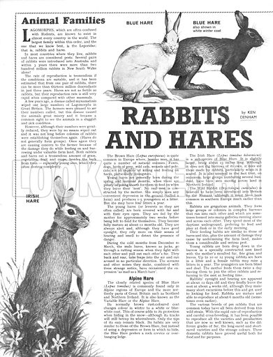 Animal Families: Rabbits and Hares.