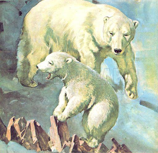 Who's Who at the Zoo. Polar Bear.
