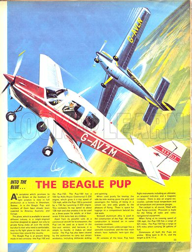 Into the Blue: The Beagle Pup.